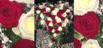 großes Rosenherz zumSstellen rote und weiße Rosen